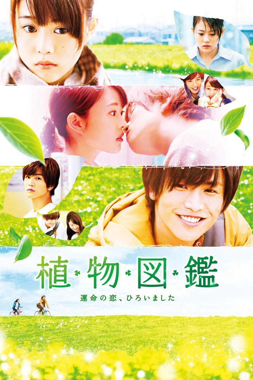 Evergreen Love Poster