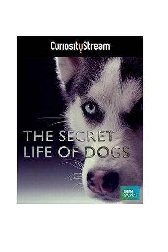 Secret Life of Dogs Poster