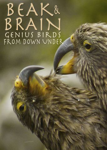 Beak & Brain - Genius Birds from Down Under Poster