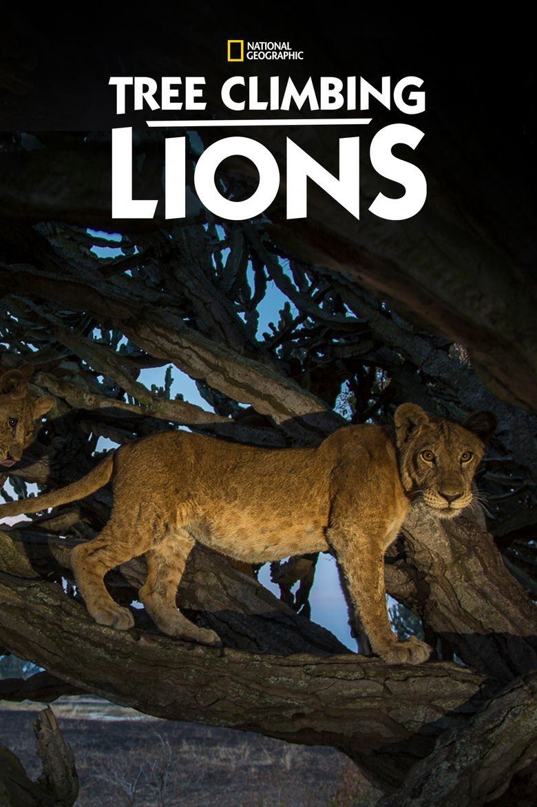 Tree Climbing Lions Poster