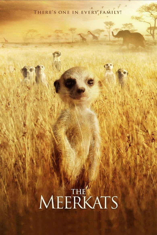 The Meerkats Poster