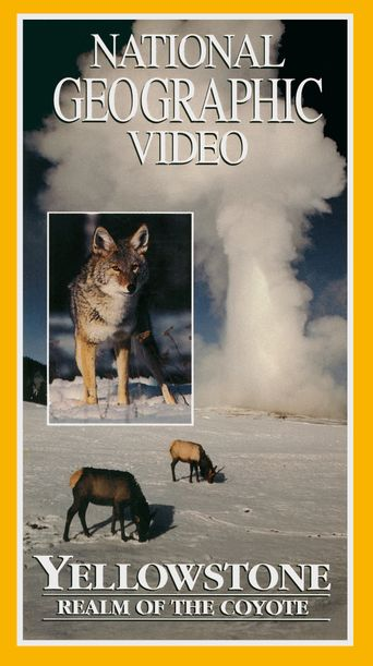 Yellowstone: Realm of the Coyote Poster