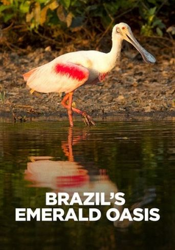 Brazil's Emerald Oasis Poster