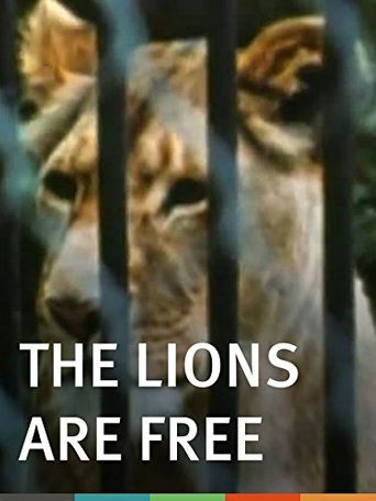The Lions Are Free Poster