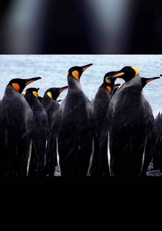 Mondo Penguin Poster