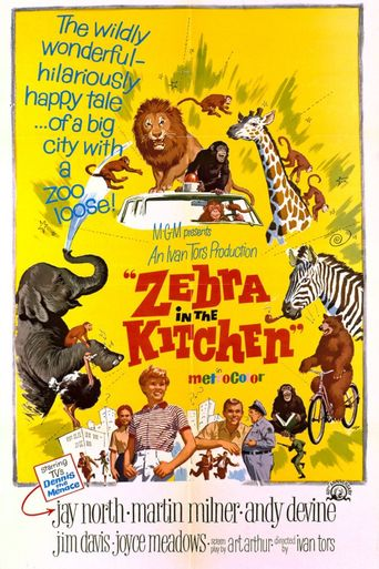 Zebra in the Kitchen Poster