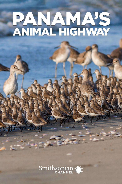 Panama's Animal Highway Poster