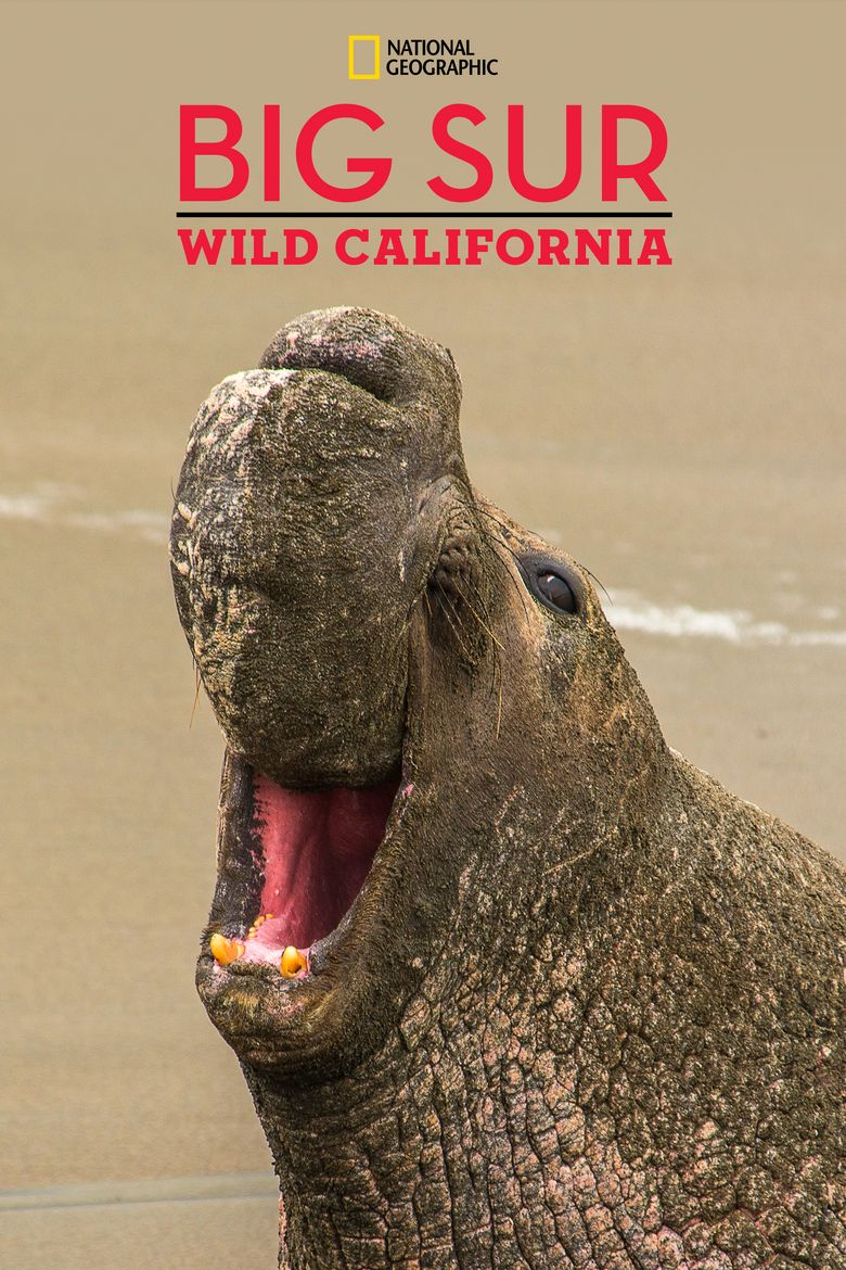 Big Sur - Wild Califonia Poster