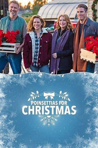 Poinsettias for Christmas Poster