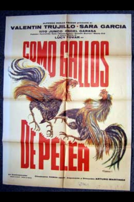 Como gallos de pelea Poster
