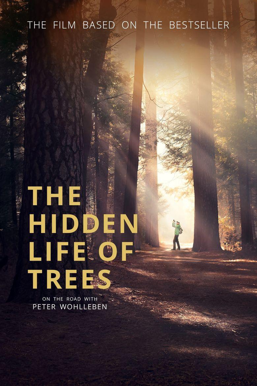 Das geheime Leben der Bäume Poster