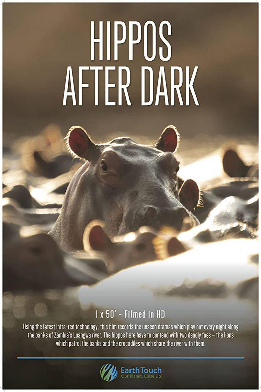 Hippos After Dark Poster