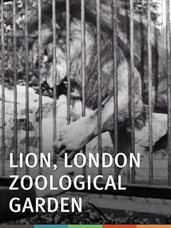 Lion, London Zoological Gardens Poster