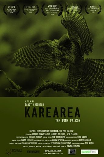 Karearea: The Pine Falcon Poster