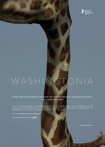 Washingtonia Poster