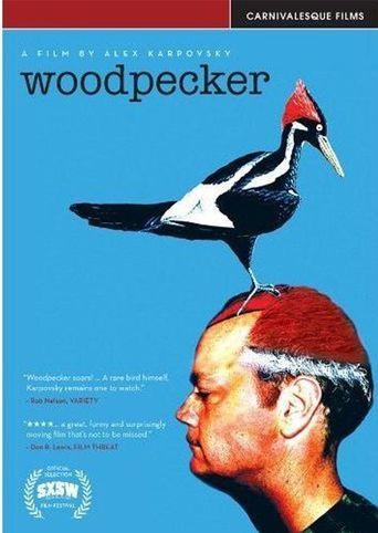 Woodpecker Poster