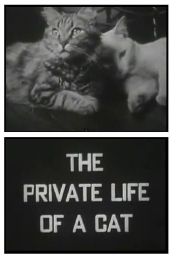 The Private Life of a Cat Poster