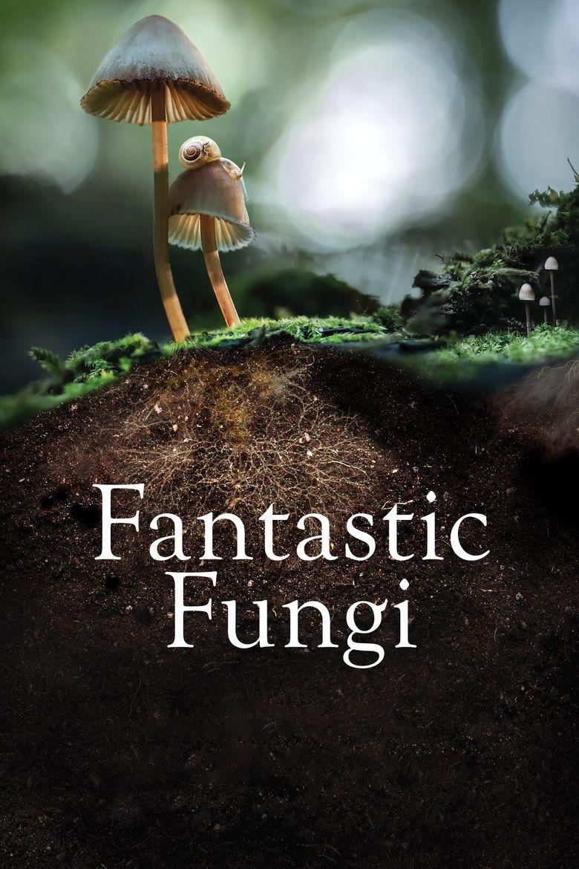 Fantastic Fungi Poster
