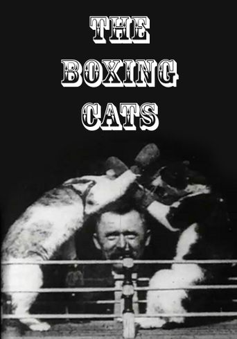 The Boxing Cats (Prof. Welton's) Poster