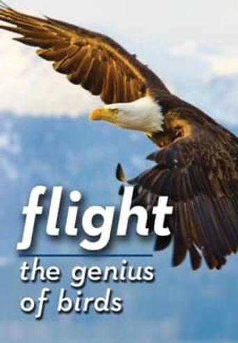 Flight: The Genius of Birds Poster