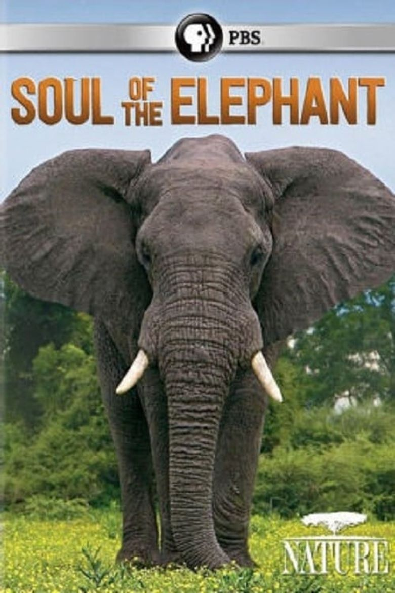 Soul of the elephant Poster