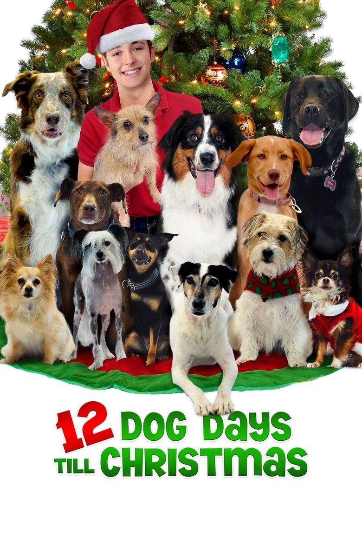12 Dog Days Till Christmas Poster