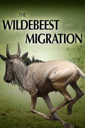 The Wildebeest Migration: Nature's Greatest Journey Poster