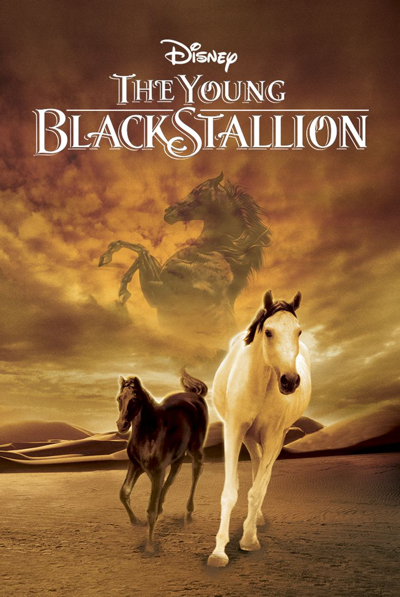 Young Black Stallion Poster