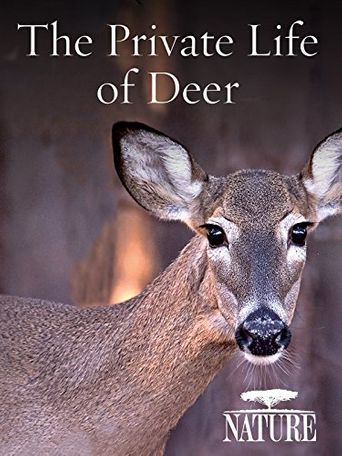 The Private Life of Deer Poster
