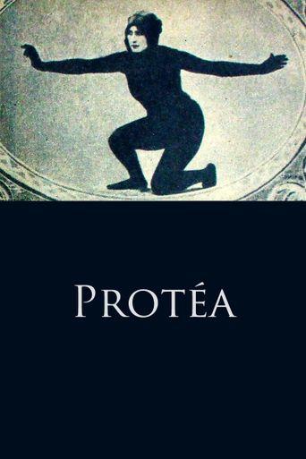 Protéa Poster
