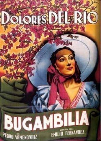 Bugambilia Poster