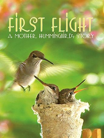 First Flight: A Mother Hummingbird's Story Poster