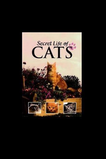 Secret Life of Cats Poster