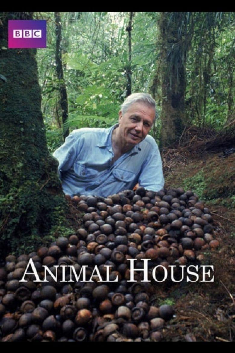 Animal House Poster