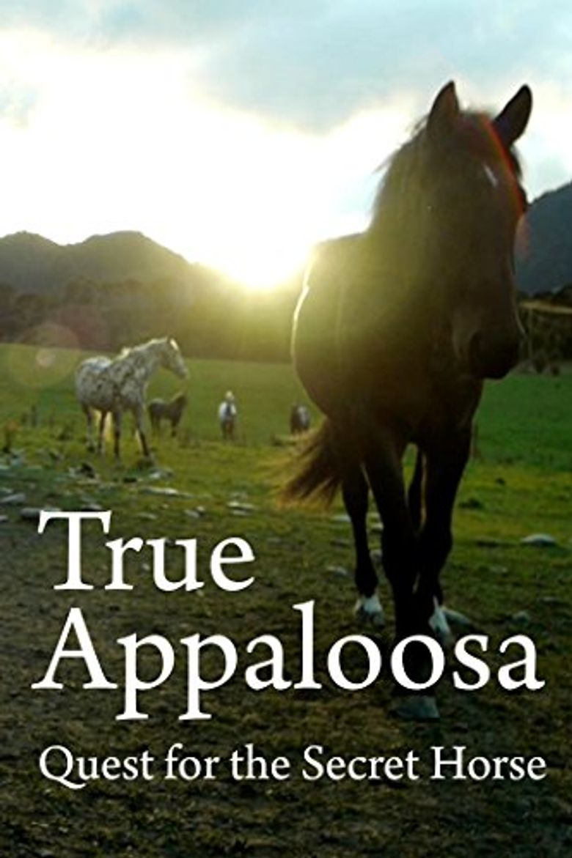 True Appaloosa Poster