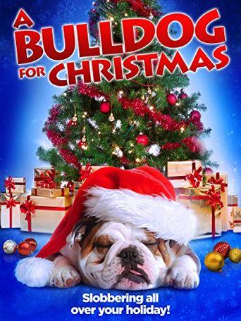 A Bulldog for Christmas Poster