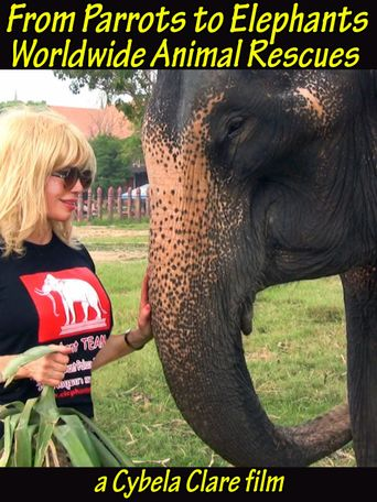 From Puppeteering Parrots to Exploiting Elephants: Worldwide Animal Rescues for Performance Based Concentration Camps- Medical Care such as Prosthetics Provided! After All: The Show Must Go On! Poster