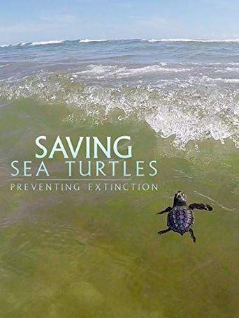 Saving Sea Turtles: Preventing Extinction Poster