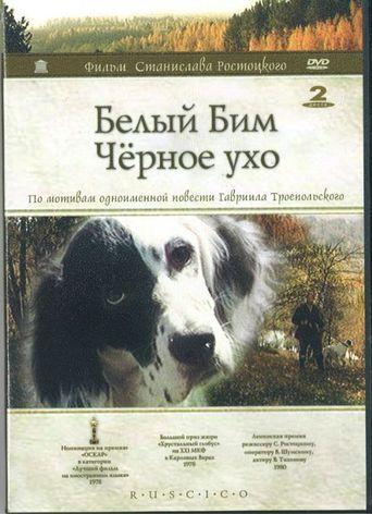 White Bim Black Ear Poster