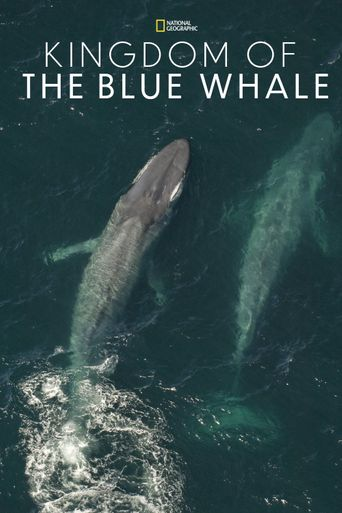 Kingdom of the Blue Whale Poster