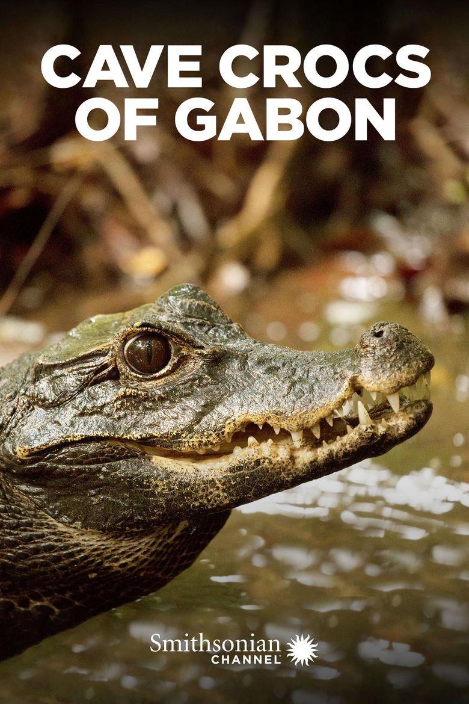 Cave Crocs of Gabon Poster