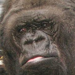 Koko Image