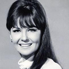 Shelley Fabares Image
