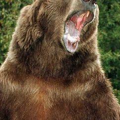 Bart The Bear Image