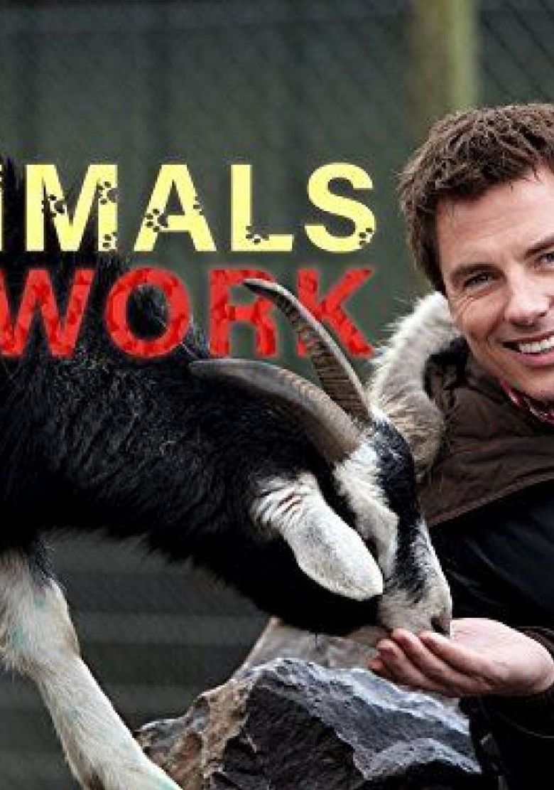 Animals at Work Poster