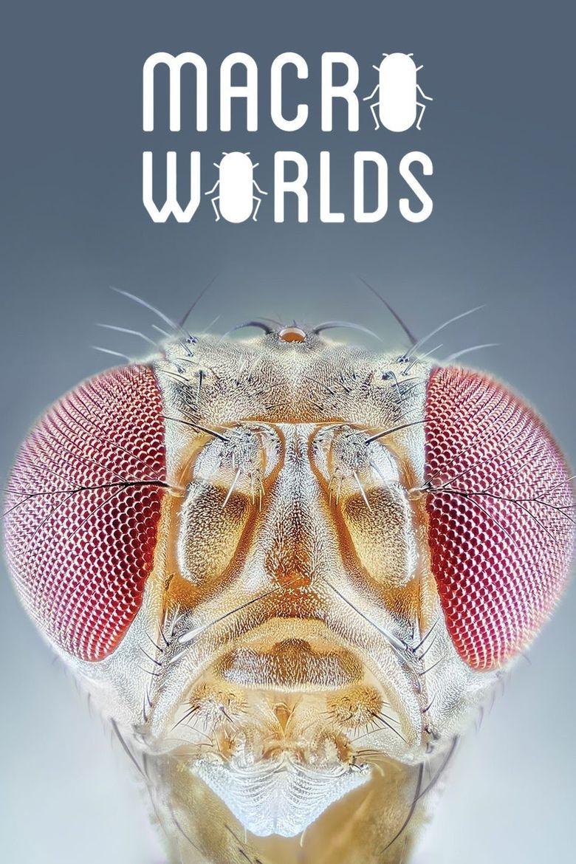 Macro Worlds Poster