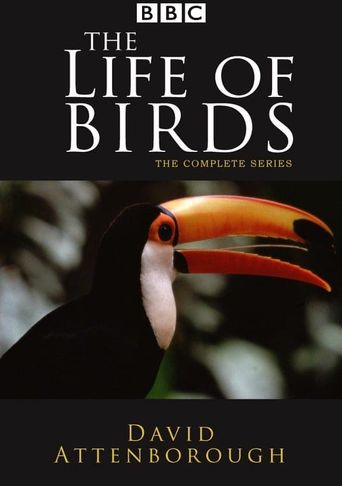 The Life of Birds Poster