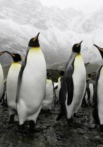 Penguinpalooza Poster