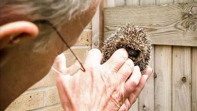 Season 01, Episode 03 Hedgehogs