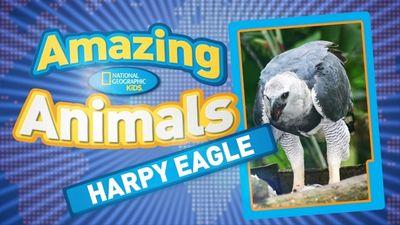 Season 01, Episode 05 Harpy Eagle